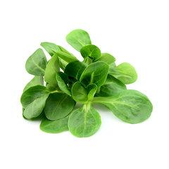 groenbeleg