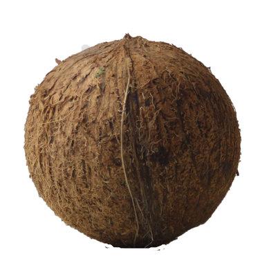 kokosnoot - stuk