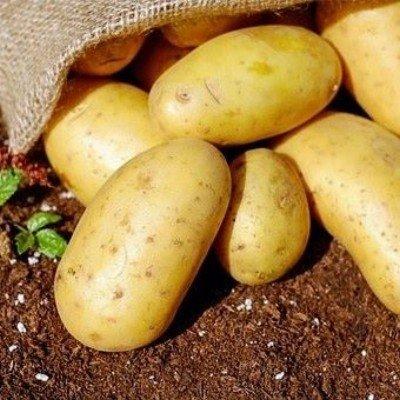aardappelen kruimig - velhorst - connect - kg