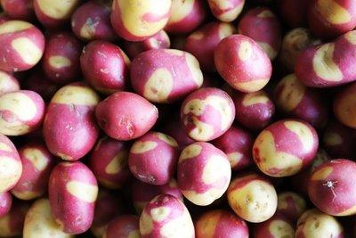 aardappelen krieltjes celebration - velhorst - kg