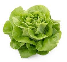 biologische-sla-kropsla-groen